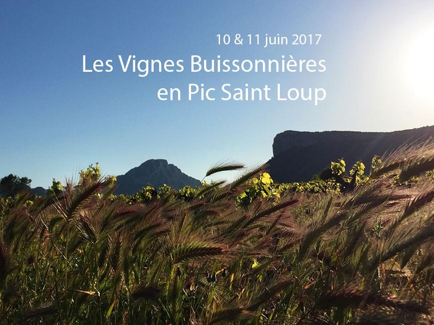 Vignes buissonnières 2017