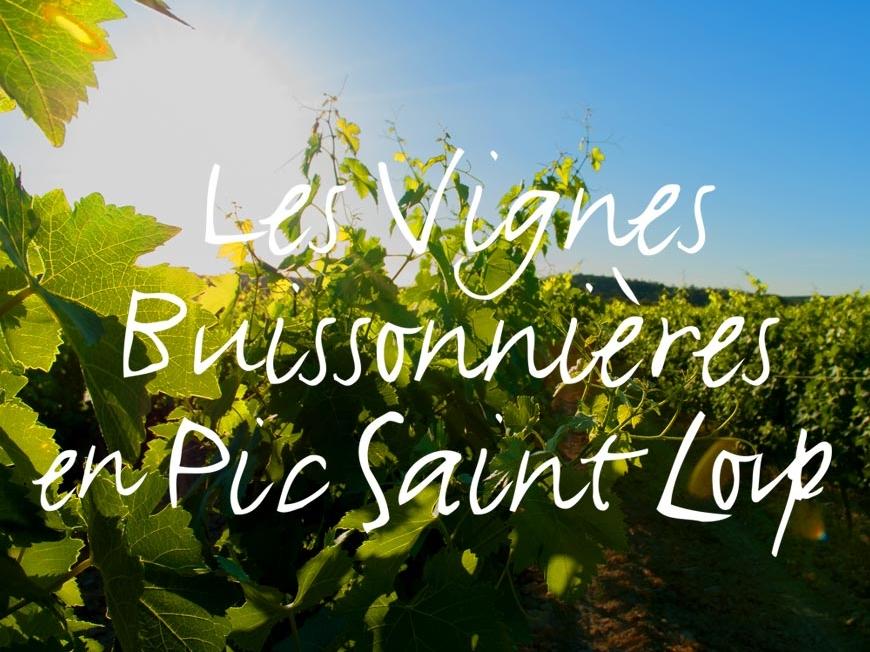 Les Vignes Buissonnières 2018