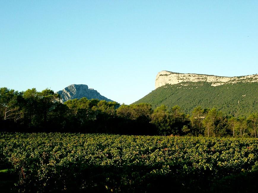 DOSSIER Les Vignes Buissonnières en Pic Saint-Loup sur le site IN VINO VERITAS
